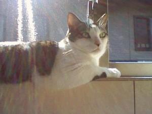 HouseY2C 猫たちの午後 タイトル写真
